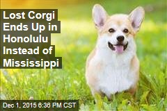 Lost Corgi Ends Up in Honolulu Instead of Mississippi