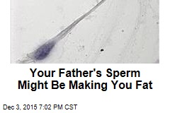 Your Father's Sperm Might Be Making You Fat