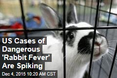 US Cases of Dangerous 'Rabbit Fever' Are Spiking