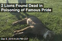 2 Lions Found Dead in Poisoning of Famous Pride