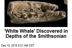 'White Whale' Discovered in Depths of the Smithsonian