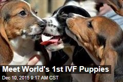 Meet World's 1st IVF Puppies