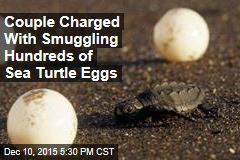 Couple Charged With Smuggling Hundreds of Sea Turtle Eggs