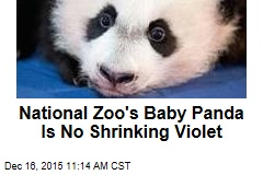 National Zoo's Baby Panda Is No Shrinking Violet