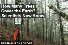 Researchers Tally Up All the Trees on the Planet