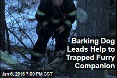 Barking Dog Leads Help to Trapped Furry Companion