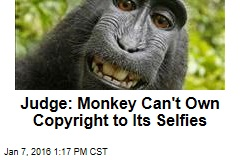 Judge: Monkey Can't Own Copyright to Its Selfies