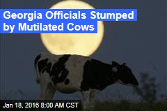Ga. Officials Stumped By Mutilated Cows