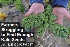 Farmers Struggling to Find Enough Kale Seeds