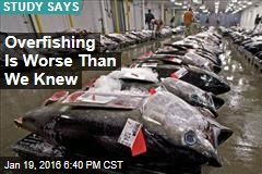 Study: Overfishing Is Worse Than We Knew
