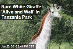 Rare White Giraffe 'Alive and Well' in Tanzania Park