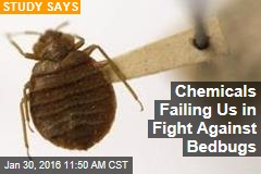 Chemicals Failing Us in Fight Against Bedbugs