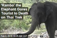 'Rambo' the Elephant Gores Tourist to Death on Thai Trek