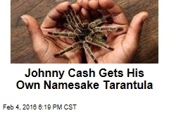 Johnny Cash Gets His Own Namesake Tarantula