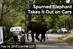 Spurned Elephant Takes It Out on Cars