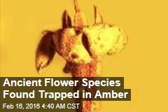 Ancient Flower Species Found Trapped in Amber