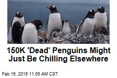 150K 'Dead' Penguins Might Just Be Chilling Elsewhere