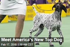 Meet America's New Top Dog