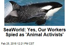 SeaWorld: Yes, Our Workers Spied as 'Animal Activists'