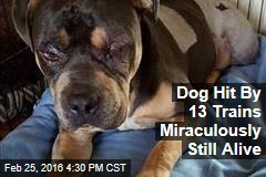 Dog Hit By 13 Trains Miraculously Still Alive