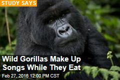 Wild Gorillas Make Up Songs While They Eat