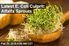 Latest E. Coli Culprit: Alfalfa Sprouts