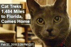 Cat Treks 1,484 Miles to Florida, Comes Home