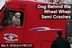 Dog Behind the Wheel When Semi Crashes