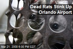 Dead Rats Stink Up Orlando Airport
