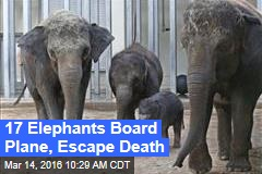 17 Elephants Board Plane, Escape Death