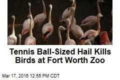 Tennis Ball-Sized Hail Kills Birds at Fort Worth Zoo