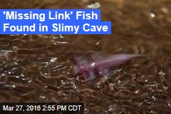 'Missing Link' Fish Found in Slimy Cave