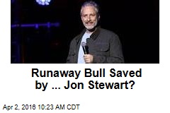 Runway Bull Saved by ... Jon Stewart?