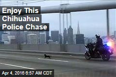Enjoy This Chihuahua Police Chase