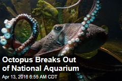 Octopus Breaks Out of National Aquarium