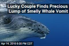 Lucky Couple Finds Precious Lump of Smelly Whale Vomit