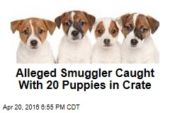 Alleged Smuggler Caught With 20 Puppies in Crate