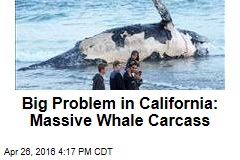 Big Problem in California: Massive Whale Carcass