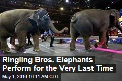 Ringling Bros. Elephants Perform for the Very Last Time