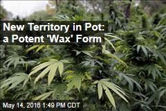 New Territory in Pot: a Potent 'Wax' Form