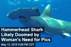 Hammerhead Shark Likely Doomed by Woman's Need for Pics
