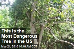 This Is the Most Dangerous Tree in the US