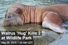 Walrus 'Hug' Kills 2 at Wildlife Park