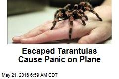 Escaped Tarantulas Cause Panic on Plane
