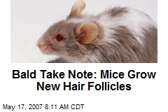 Bald Take Note: Mice Grow New Hair Follicles