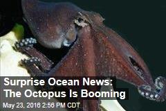 Surprise Ocean News: The Octopus Is Booming