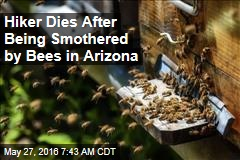 Hiker Dies After Being Smothered by Bees in Arizona