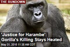 'Justice for Harambe': Gorilla's Killing Stays Heated