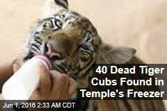 40 Dead Tiger Cubs Found in Temple's Freezer