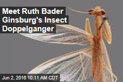 Meet Ruth Bader Ginsburg's Insect Doppelganger